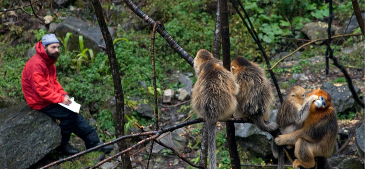<i>Behavioural observation on a group of  Golden Snub-Nosed Monkey in China</i>